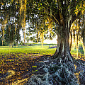 Debra and Dave Vanderlaan - Spanish Moss