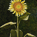 Mary Ann King - Sunflower in the Night