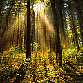 Phil Koch - The Pines