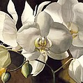 Alfred Ng - White Orchids