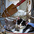 Rick Grisolano Photography LLC - 2013 July Kittens in a...