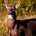 Rick Grisolano Photography LLC - 2014 October Small Buck...