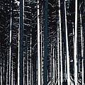Maria Bobrova - High Contrast Forest