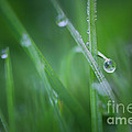 HJBH Photography - Morning dew on grass