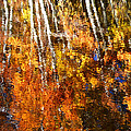 Lynn Bauer - Reflections of Fall