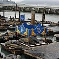 James Connor - Seals Relaxing on Pier 39
