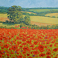 Katharine Green - Poppies