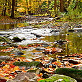 Frozen in Time Fine Art Photography - Autumn Stream