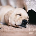 Robin Lee Mccarthy Photography - #708 20a Sleep Well...