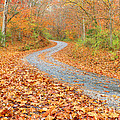 Lynn Whitt - Autumn Road