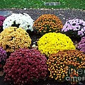 Charlotte Gray - A Bunch of Beautiful mums