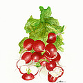 Nan Wright - A Bunch of Red Radishes...