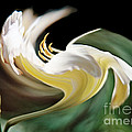ImagesAsArt Photos And Graphics - A Drunk Daylily Bloom