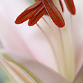 HJBH Photography - A macro of a soft pink...