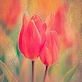 Anne Macdonald - A Red Tulip Moment