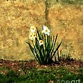RC deWinter - A Spot of Spring