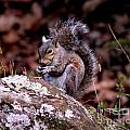 Eva Thomas - A Squirrel Enjoying its...