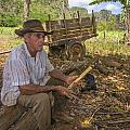 David Litschel - A Tobacco Farmer in Cuba