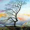 Anne Dalton - A tree in winter