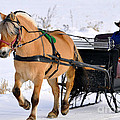 Andrew Lorimer - Amish  Sleigh