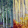Constance Widen - A Year in an Aspen Forest