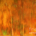 Darren Fisher - Abstract of Autumn