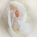 Jennie Marie Schell - Abstract Pastel Rose...