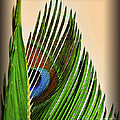 Walt Foegelle - Abstract Peacock Palm...