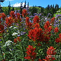 Photography Moments - Sandi - Alpine Garden - Mount...
