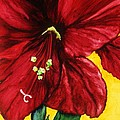 Lil Taylor - Amaryllis in Red