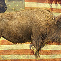 James BO  Insogna - American Buffalo