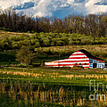 Amy Cicconi - American Flag Barn