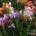 RC deWinter - American Giverny