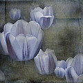 Evie Carrier - Amethyst Tulips
