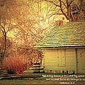 Debbie Nobile - An old house