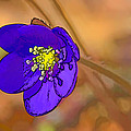 Leif Sohlman - Anemone hepatica si-  By...