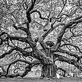 Dawna  Moore Photography - Angel Oak Johns Island...