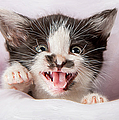 Ronel Broderick - Angry Kitten with Paint...