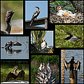 Dawn Currie - Anhinga Collage