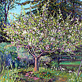 Asha Carolyn Young - Apple Blossoms and...
