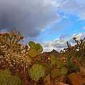 James Welch - Arizona Cactus In Spring