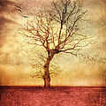 Viaina     - ATMOSPHERIC TREE -...