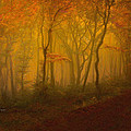 Angela A Stanton - Autumn Forest in Misty...