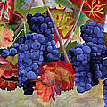 Sue Birkenshaw - Autumn Grape Vines