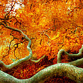 Mike Savad - Autumn - Tree -...