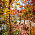 Debra and Dave Vanderlaan - Autumn Walk
