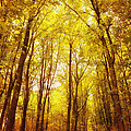 HJBH Photography - Autumn walk in the forest