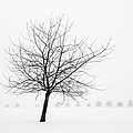 Matthias Hauser - Bare tree in winter -...