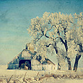 Julie Hamilton - Barn Frosty Trees