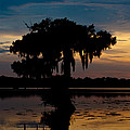 Susie Hoffpauir - Bayou Beauty